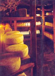 Shai Seltzer Cheese & Goats